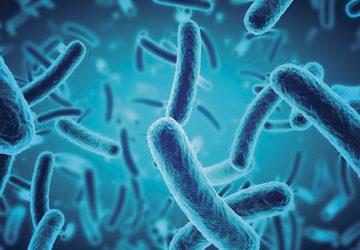 Los probióticos, aliados de la prevención de enfermedades